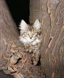 Muffy in split tree Stock Photos