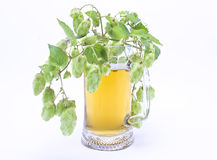 Mug свежее пиво с крышкой пены с sprig хмелей Стоковое Фото