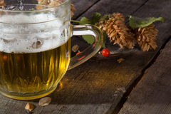 Mug of beer and branch  hop Stock Photography