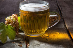 Mug of beer and branch  hop Royalty Free Stock Photography