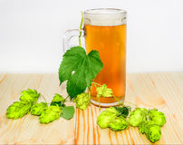 Mug of beer and branch of hops on wooden surface Stock Photos