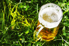 Mug of beer in green grass. With copy space Royalty Free Stock Image