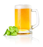 Mug beer with Green hops  on white Stock Images