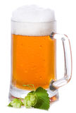 Mug with beer and hop Royalty Free Stock Image