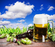 Mug with Beer with hop Royalty Free Stock Photos