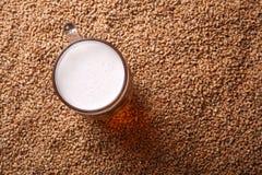 Mug of beer on malt. Mug of light beer standing on malted barley grains Stock Photos