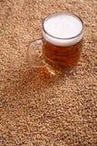 Mug of beer on malt. Mug of light beer standing on malted barley grains Royalty Free Stock Photos