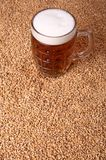 Mug of beer on malt. Mug of light beer standing on malted barley grains Royalty Free Stock Photo