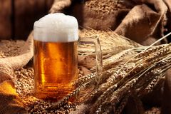 Mug of beer in malt.Pale malt, crystal malt. Still life. Copy space . Mug of beer in malt.Pale malt, crystal malt. Still life. Copy space royalty free stock photos