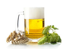 Mug of beer on table with hop cones, ears of wheat  on white Royalty Free Stock Photo