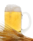 Mug of beer and wheat. A mug full of beer and wheat stalks isolated on white background stock photo