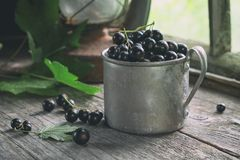 Mug of black currant berries on wooden table in a retro village house. Stock Photo