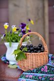 Mug with black currants Stock Images