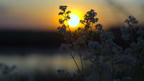 Mug die naar slaap dichtbij de rivier op zonsondergang gaan stock footage