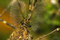 Mug extreem close-up of macrofoto Stock Foto