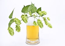 Mug fresh beer with cap of foam with sprig of hops Stock Image