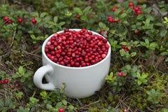 Mug full of Cowberries Stock Image