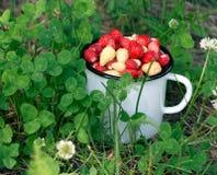 Mug full of wild strawberries in the grass. Vintage enamel mug full of red and white wild strawberries in the grass Stock Photo