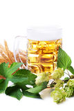 Mug of golden beer with hop leaves and wheat Stock Image