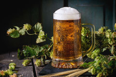 Mug of lager beer Royalty Free Stock Images