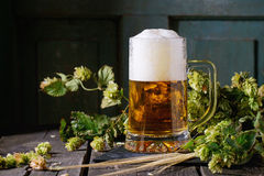 Mug of lager beer Stock Images