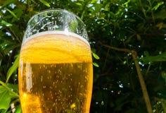 Mug of light beer Royalty Free Stock Photos