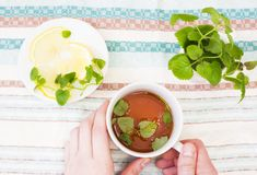 Mug of Mint tea with Melissa and lemon in hand on the background. Of the tablecloth Royalty Free Stock Photo