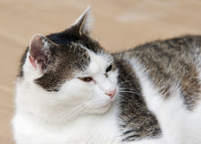 Mug op de neus van kat royalty-vrije stock afbeeldingen
