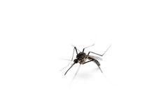 Mug op witte achtergrond, macro stock afbeeldingen