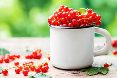 Mug of Red currant berries on table Stock Photo