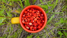 Mug of wild strawberries. Staying in the grass Stock Photo