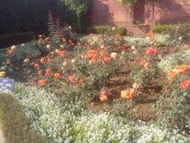 Mugal庭院 库存图片