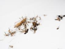 Muggen en andere schadelijke insecten die van dood de een rommel maken, elimineren, Stock Fotografie