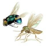 Muggen en vliegen Royalty-vrije Stock Foto's