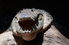Mugger krokodilhoofd stock foto