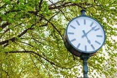Muggito dell'orologio l'albero Fotografie Stock Libere da Diritti