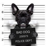 Mughsot psia kość Obrazy Stock
