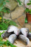 Mugil cephalusvissen stock foto's