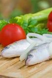 Mugil cephalusvissen stock afbeelding