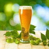 Mugs with beer and hop on wooden table Stock Images