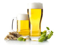 Mugs of beer on table with hop cones, ears of wheat isolated on white. Background Stock Photo