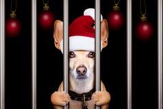 Christmas mugshot dog stock images