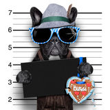 Mugshot dog Royalty Free Stock Images