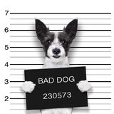 Mugshot dog Royalty Free Stock Photo