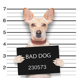 Mugshot dog Royalty Free Stock Image