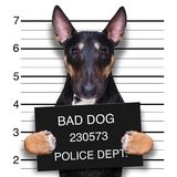 Mugshot dog at police station stock photos
