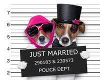 Mugshot just married dogs stock images