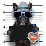 Mugshothund Royaltyfria Bilder
