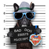 Mugshothund stockfotografie
