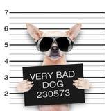 Mugshothund royaltyfri bild